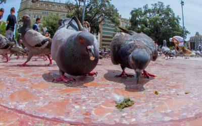 How to Clean Bird Poop off Concrete